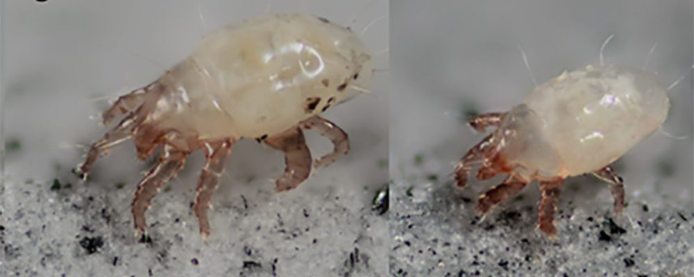 cropped-mite-photo-for-blog.jpg