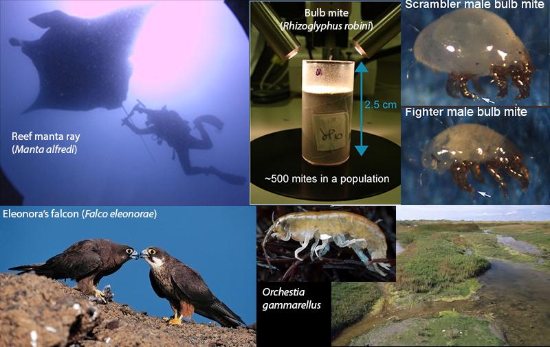 study organisms.jpg